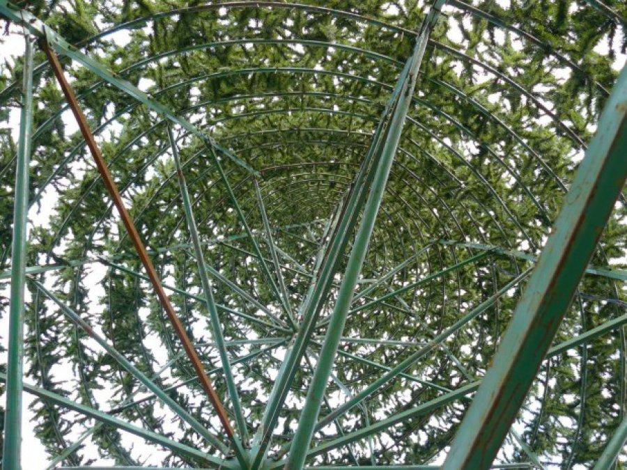 ВКлинцах показали новейшую искусственную елку с впечатляющего ракурса