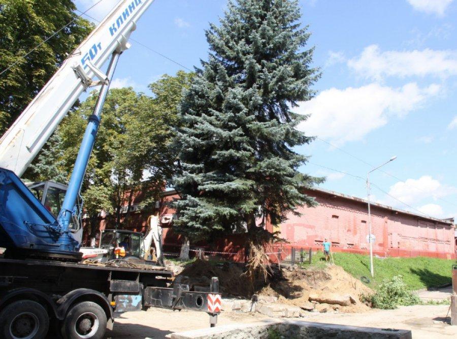 ИзСеменовского сквера вБрянске для безопасности убрали 18-метровую голубую ель