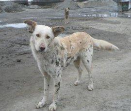 Брянские защитники животных пытаются спасти собак с асфальтобетонного завода