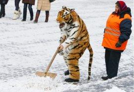 Дворники из Брянска потеснили в Москве гастарбайтеров