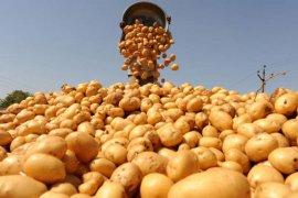 """Брянщина обменяется опытом картофелеводства с британской фирмой """"Алан Бартлетт и сыновья"""""""