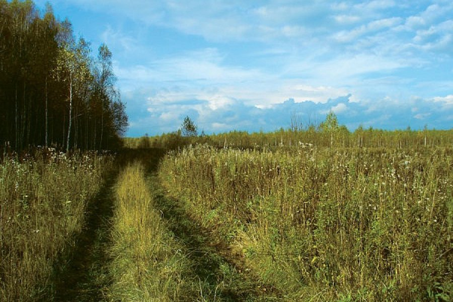 Брянские власти немогут вернуть землю всельскохозяйственный оборот