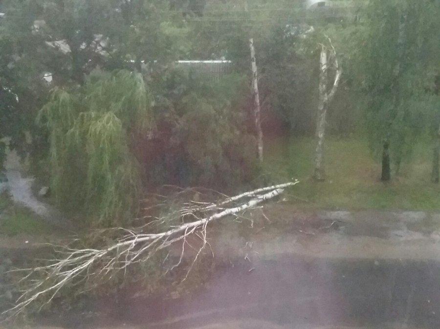 В Карачеве ураган повалил деревья