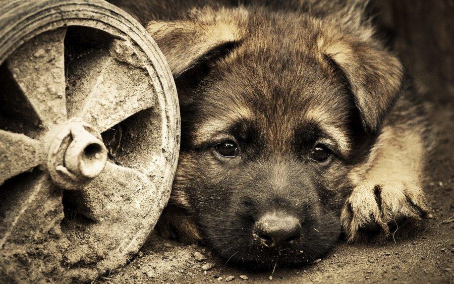 В Брянске собирают деньги, чтобы найти убийц бездомных собак