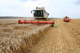 В Брянской области собрали более миллиона тонн зерна