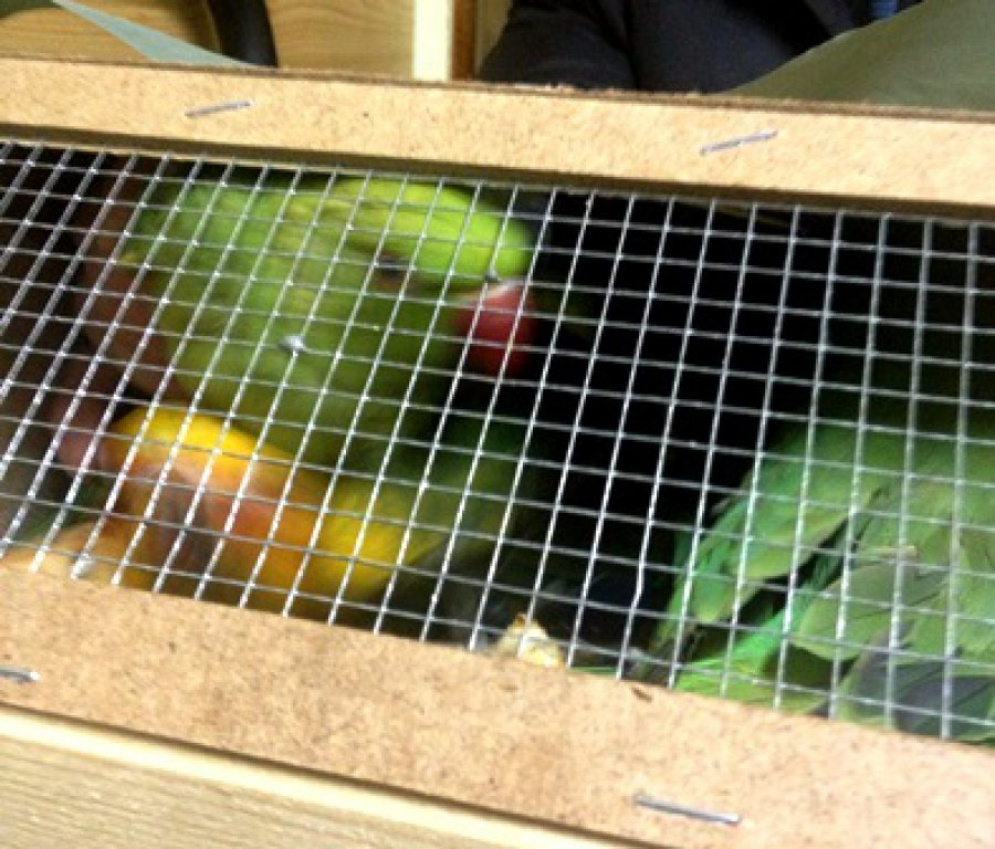 На Брянщину из Украины не пустили 12 попугаев