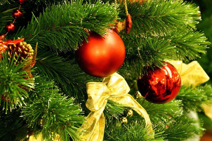 ВБрянске начали искать новогодние ели