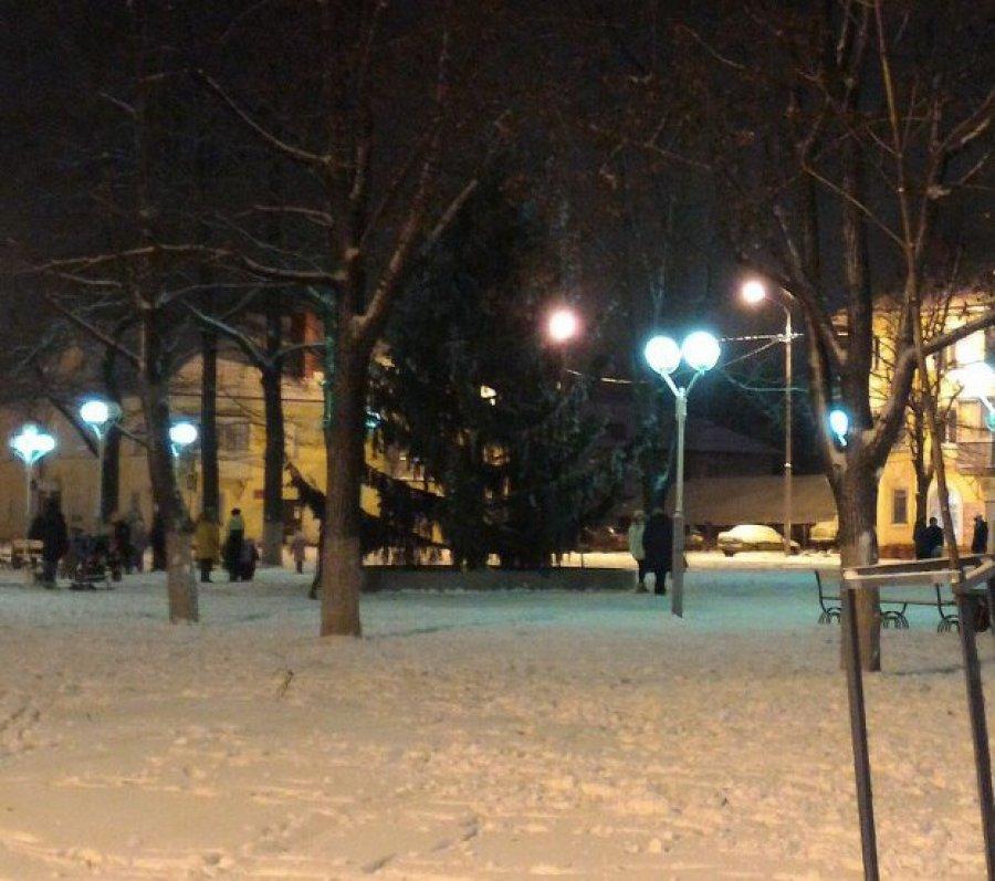 Жительница Брянска заявила, что чиновники украли у нее новогоднюю елку