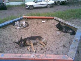 Жительница Брянска пожаловалась мэру на бродячих собак