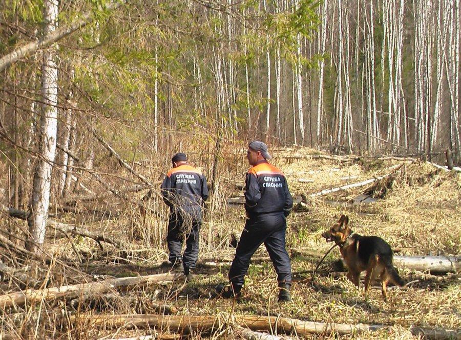 Заблудившегося брянского грибника ищут 88 человек ссобаками