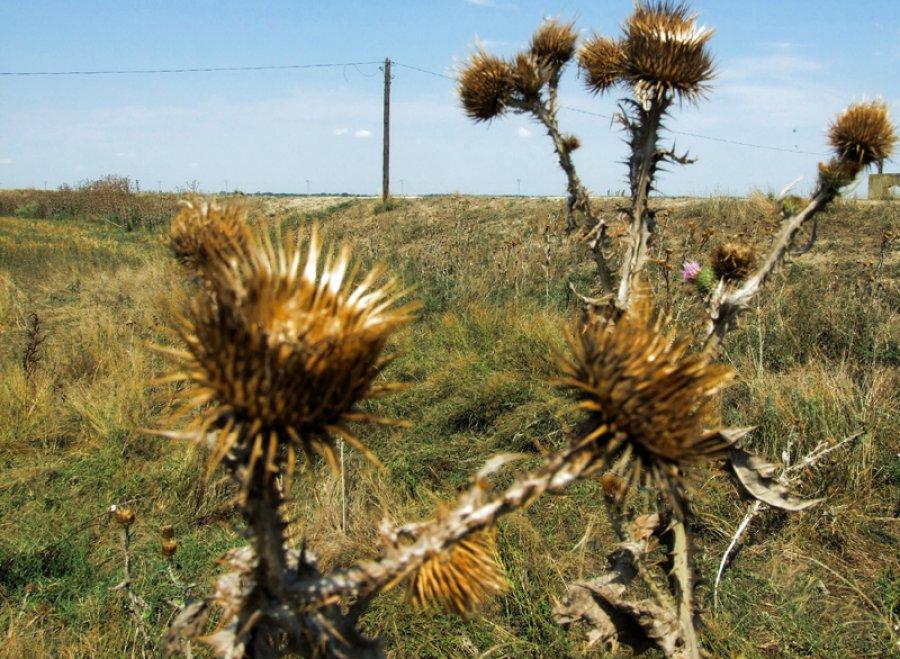 Собственника 340 гектаров земли вВяземском районе оштрафовали