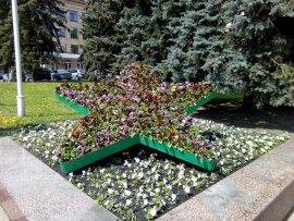 На улицах Брянска обещают высадить 170 тысяч цветов