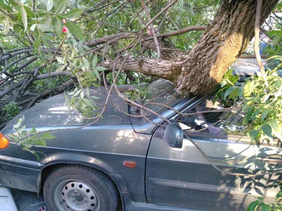 Гражданин Брянска отсудил 125 тыс. заупавшее намашину дерево