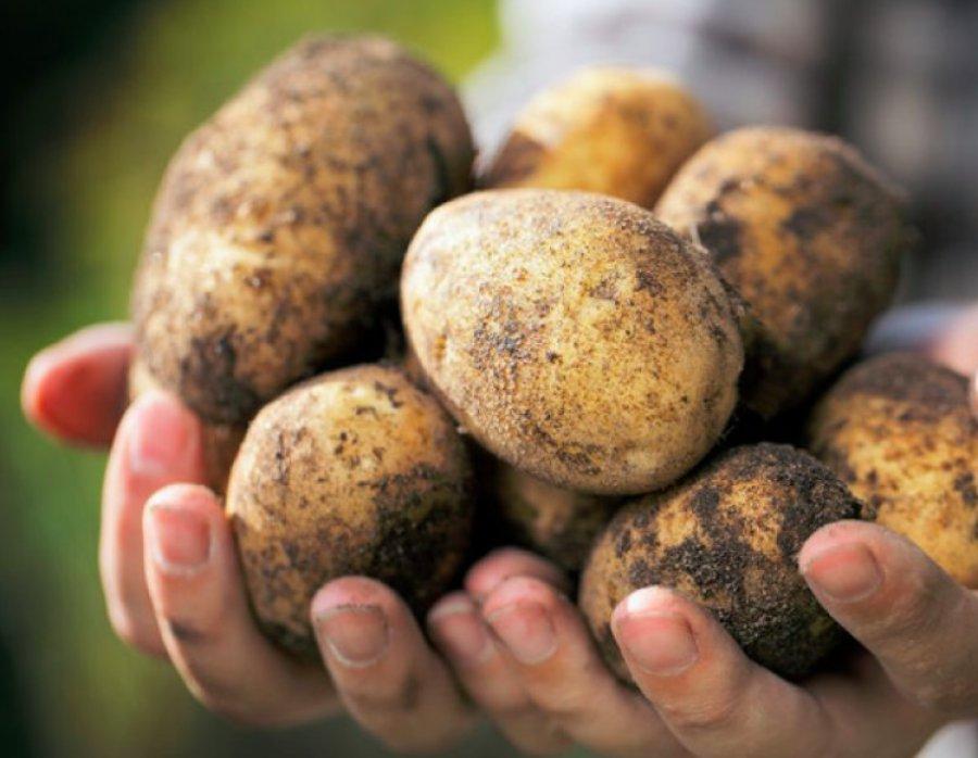 МинсельхозРФ: Брянщина— несомненный лидер попроизводству картофеля в Российской Федерации