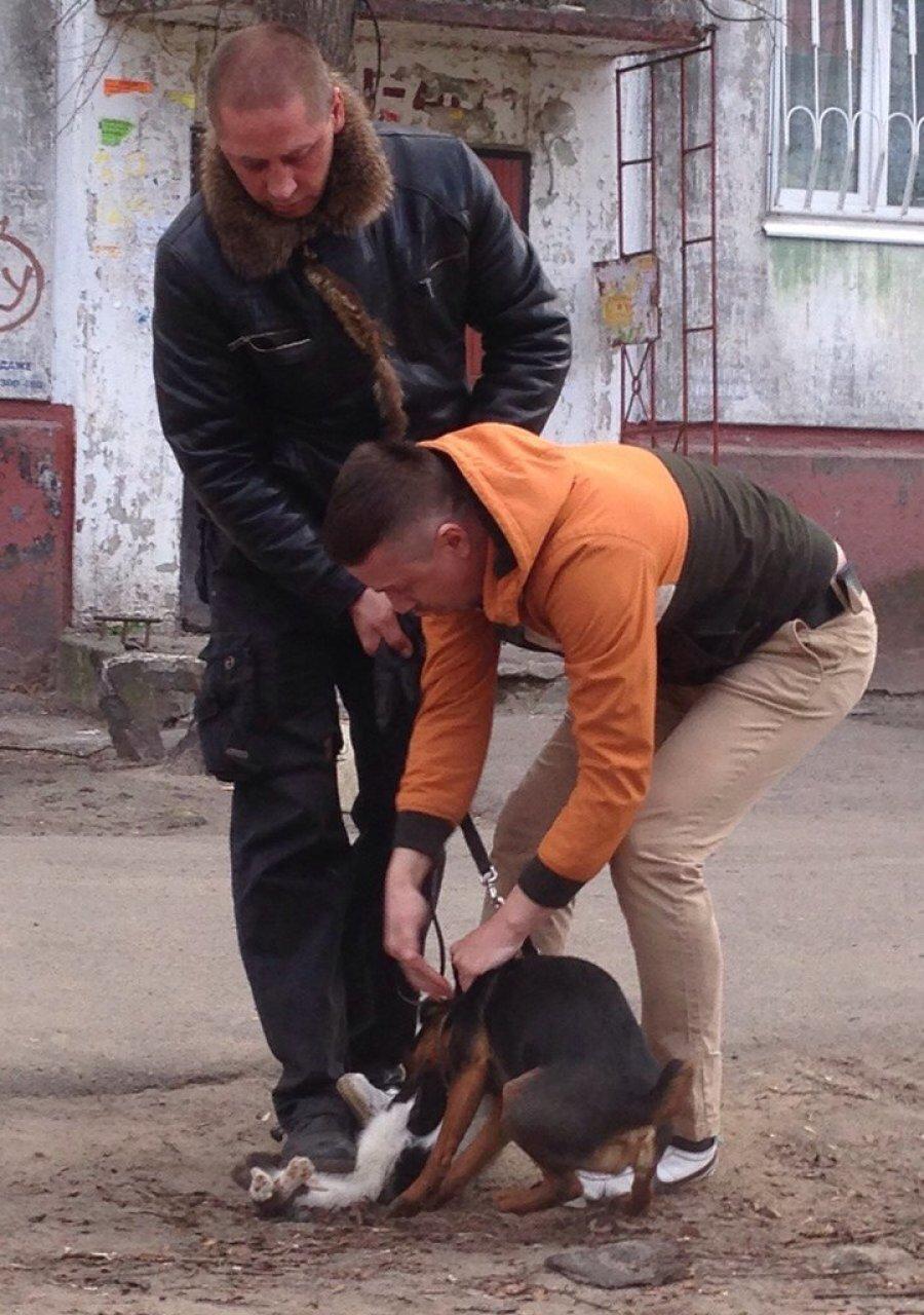 В Брянске хозяина собаки обвинили в жестокости