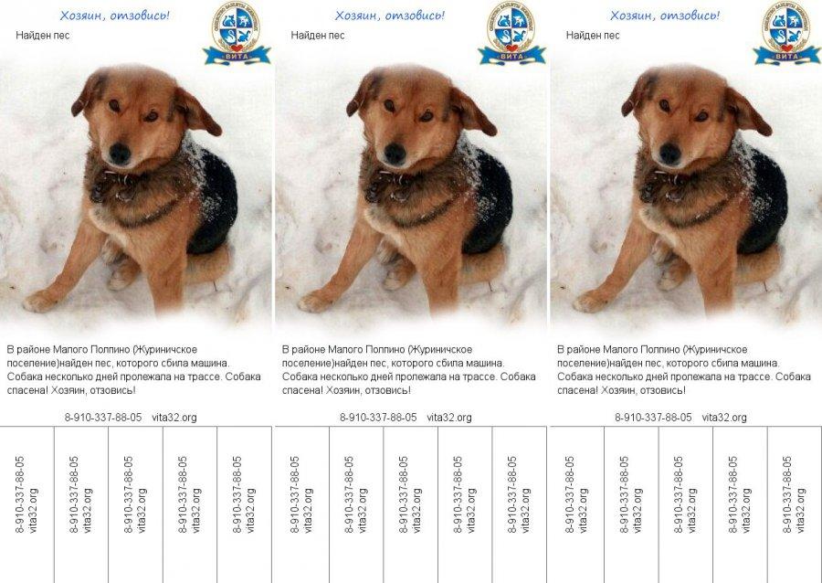 Умирающую на трассе под Брянском собаку спасли