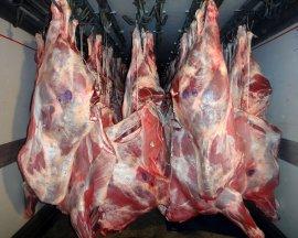На брянской границе задержали белоруса с 700 кг мяса