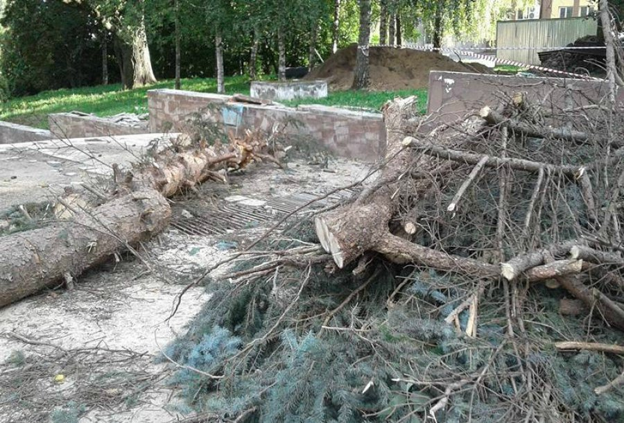 Голубую ель, выкопанную около Винного замка вБрянске, наудастся сохранить