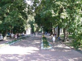 В Брянске в Круглом сквере будут искать больные деревья