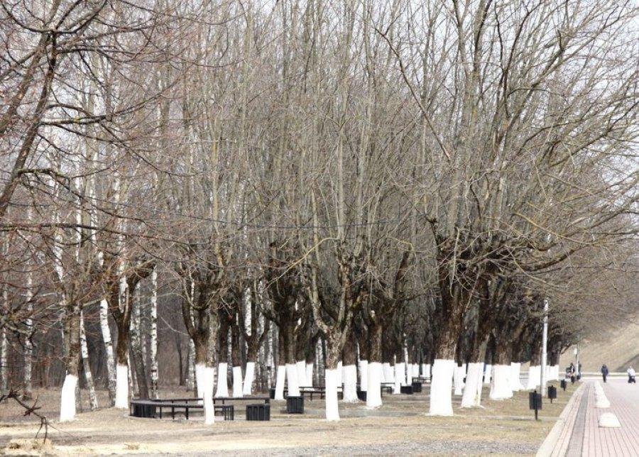 ВБрянске неменее 14 тыс. граждан подчеркнули годовщину воссоединения Крыма сРоссией