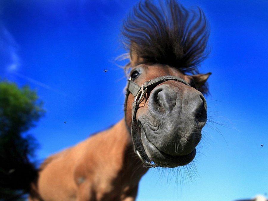 СМИ: сбившая в Брянске парня лошадь испугалась флага