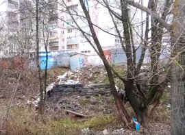 В Брянске сняли на видео свинство в лесу Володарского района