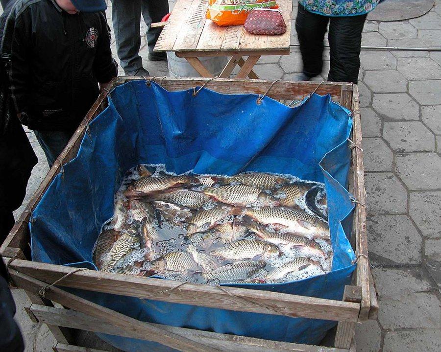 ВБрянске наулице продавали рыбу сглистами
