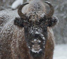 """В заповеднике """"Брянский лес"""" насчитали 272 вида животных"""