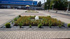 На брянские клумбы высадили 250 тысяч цветов