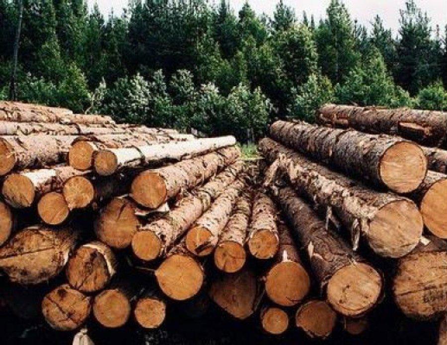 Чёрные лесорубы вырубили под Брянском 53 сосны на1,3 млн руб.