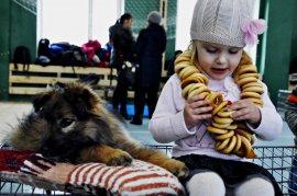 """В Брянске на фестивале «Happy cat"""" семь питомцев из приюта нашли семьи"""