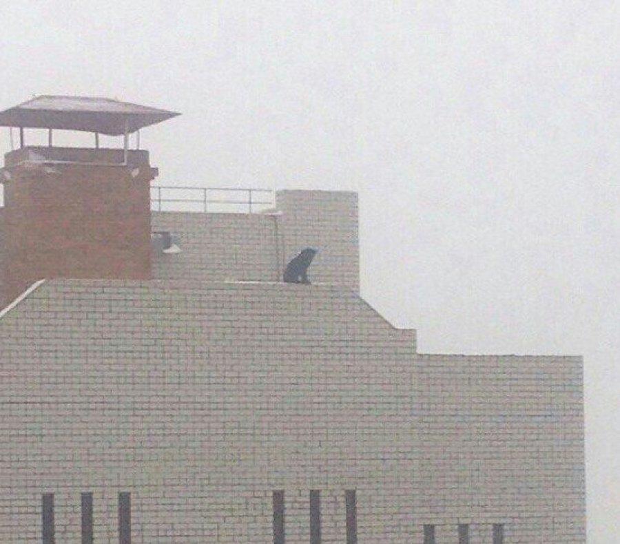 ВБрянске накрыше многоэтажки обнаружили огромного черного пса