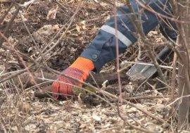 В Унечском районе нашли артиллерийские снаряды