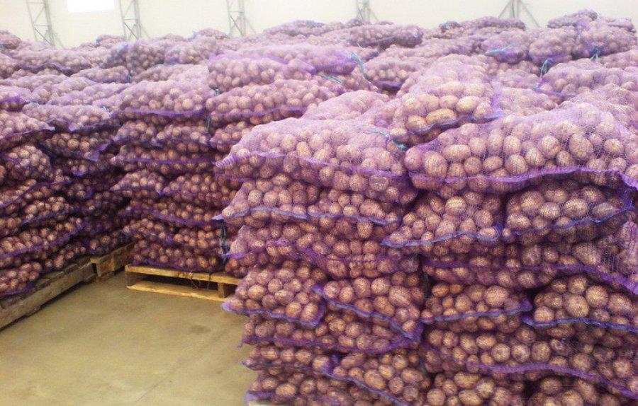 Работницы дубровской агрофирмы украли 6 тонн картофеля