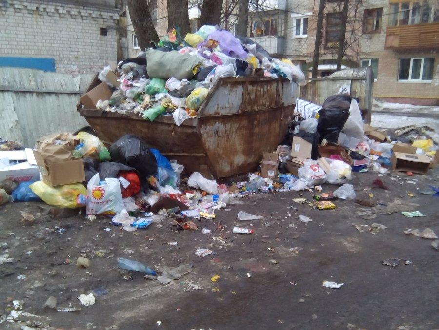 В Брянске участок возле детсада «Подсолнушек» захватили крысы и собаки