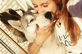 В Брянске нашли пропавшую собаку хаски