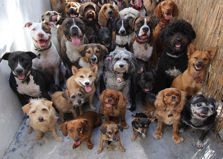 Жительницу Брянска могут выселить изквартиры из-за ее 6-ти собак