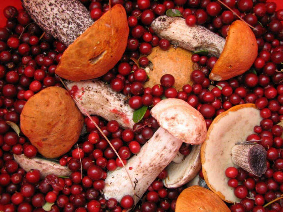 Нарынках Брянска торговали радиоактивными ягодами