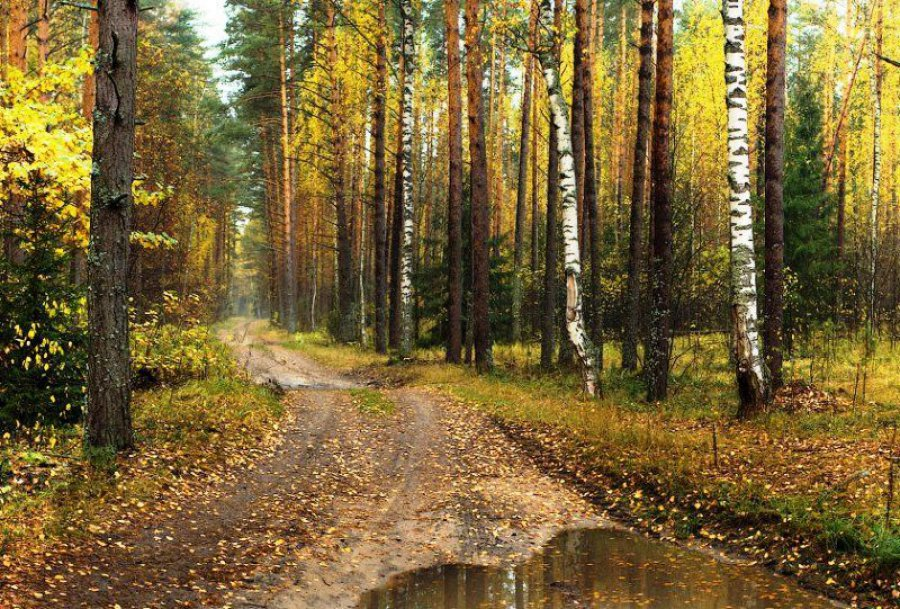 ВБрянской области засезон случилось всего два лесных пожара