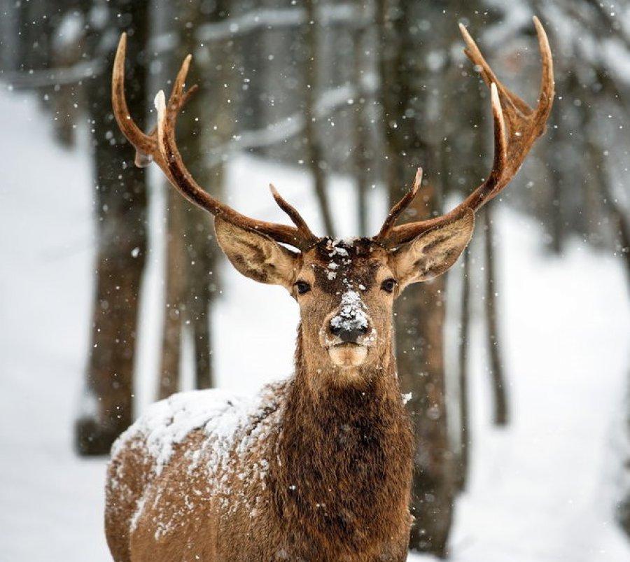 Брянский браконьер за убийство оленя заплатит 225 тысяч рублей