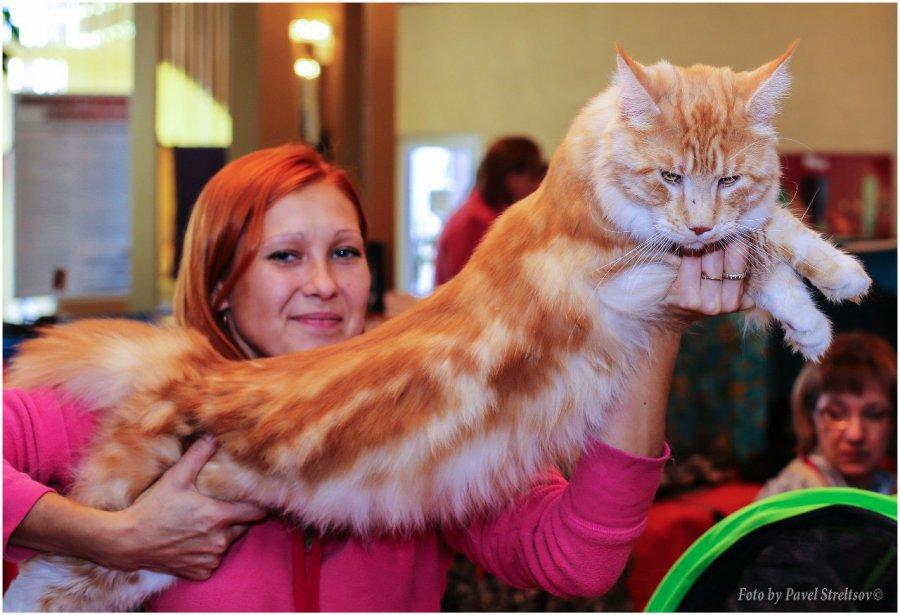 ВБрянске вконце сентября пройдёт международная выставка кошек