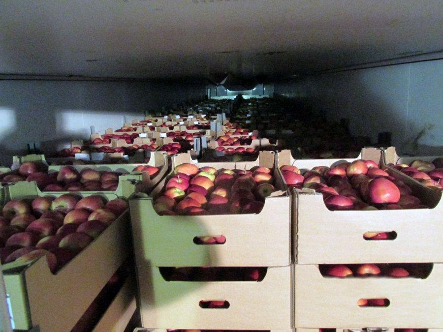 Набрянском полигине раздавили неменее  60 тонн польских яблок