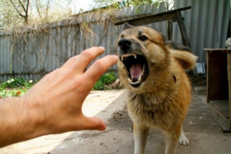 ВНовозыбкове бешеный пёс набросился нахозяев