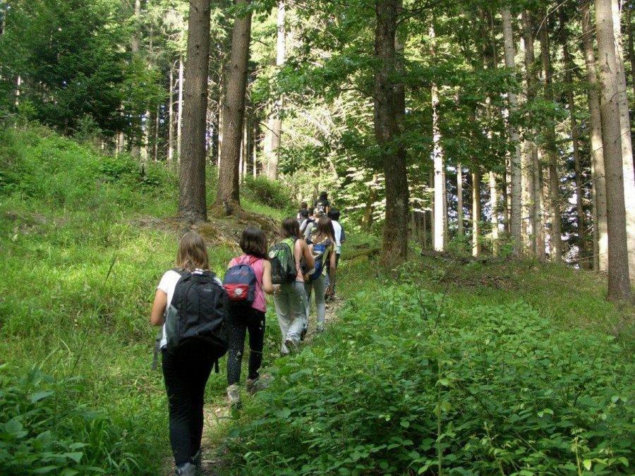 Волгоградские лесники присоединились какции «Живи, лес!»