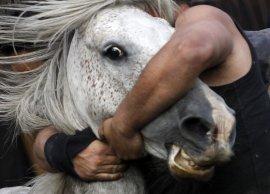 В Брянске попавший под лошадь парень отделался ушибами и ссадинами