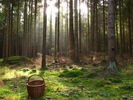 МЧС: в Брянском лесу заблудились мать и две дочери