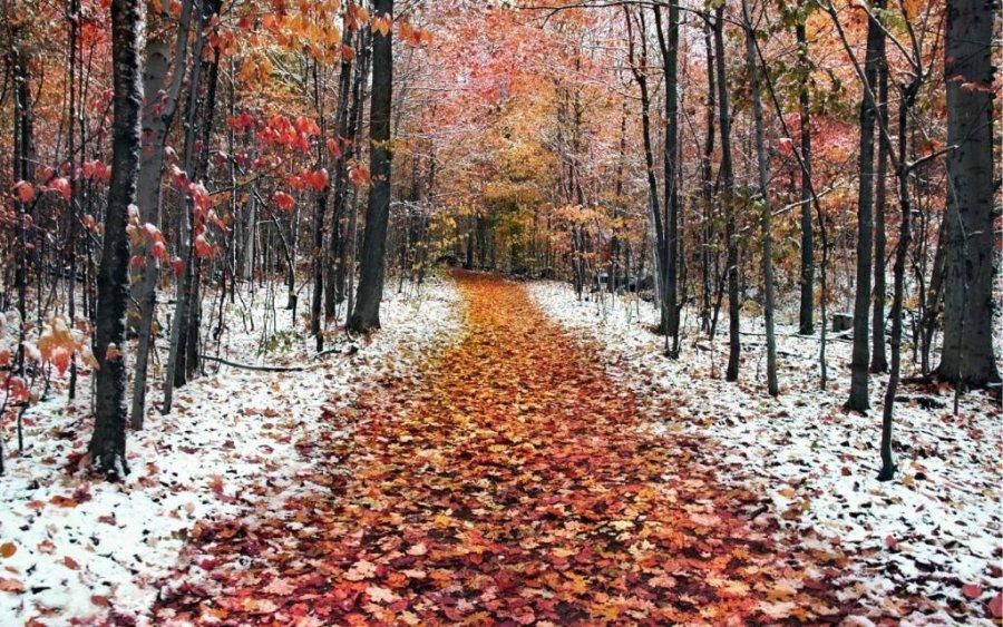 В Брянской области прогнозируют теплый ноябрь