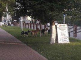 В Брянске на Кургане девушек взяли в заложницы бродячие собаки