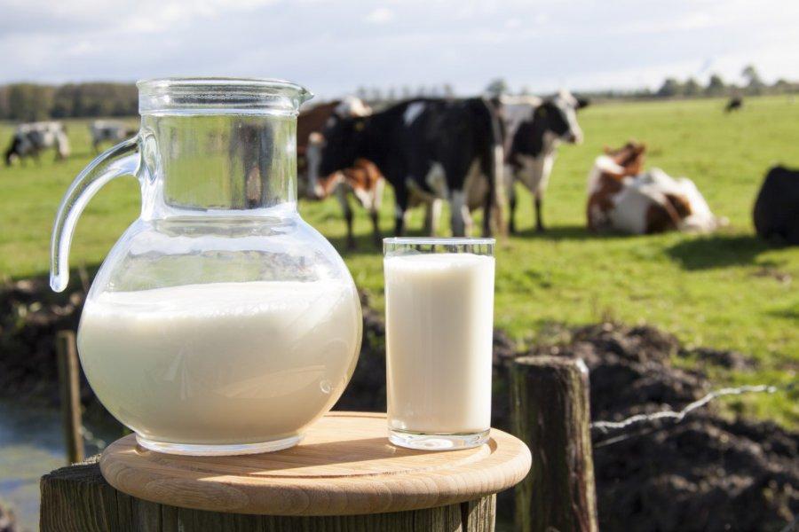 Брянские коровы дают радиоактивное молоко