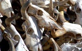 В Брянской области обнаружили 413 бесхозных скотомогильников
